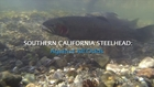 Southern California Steelhead: Against All Odds