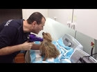 Beautiful Dog Loves Hair Dryer