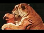 Circus Animals Rescued