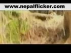 american sings nepali folk song