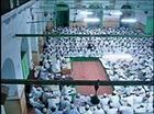Nanotvi ka Lashkar ( Hafiz Abdul Qadir )